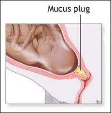 Nitty Gritty of the Mucus Plug
